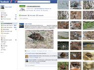 LiguriaBirding su Facebook